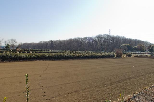 畑と林が広がる、ただそれだけの場所。そうそう、これを見に来たのだ。