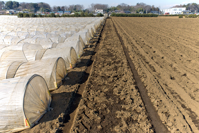 短冊状の畑と畑の間を分ける道(地図ではちゃんと道になっている)。