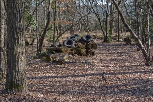 いっときこういう雑木林が続く。当然今は薪の供給などとしては機能していないようだ