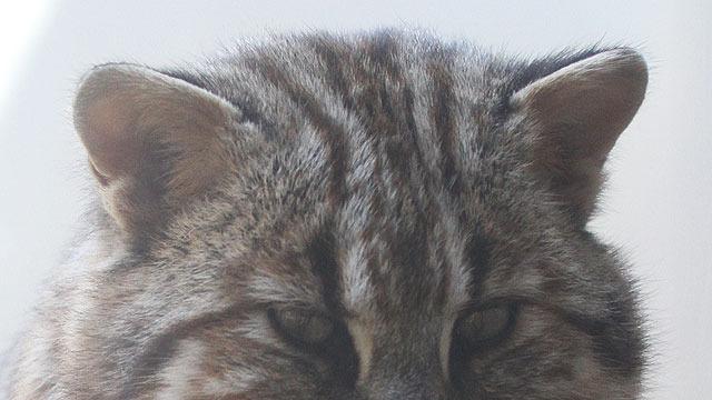 耳と額の模様がポイント。