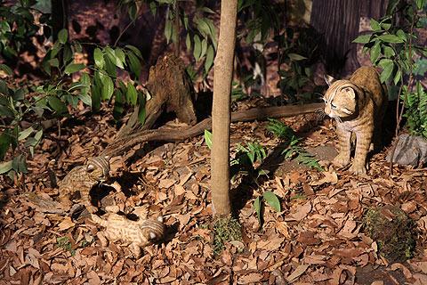 館内には野生生活を再現したジオラマなどもある。