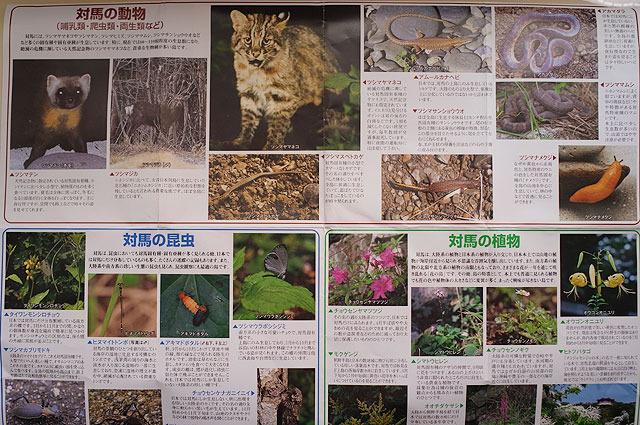 ツシマジカ、ツシマテン、ツシマナメクジなど「ツシマ~」と名の付く生き物がいっぱいいる。