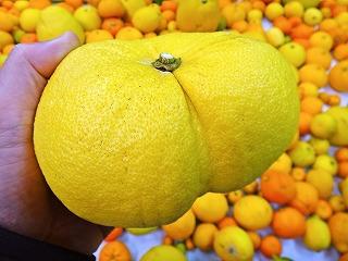 おしりを擬態するフルーツ
