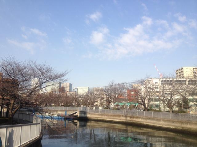かたや東京は、桜並木もちょっとはほころび始めたんじゃないかというようなお天気に。