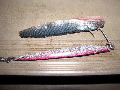 ちなみに釣りの仕掛けは巨大なルアーにサバやサンマの切り身をつけるという一風変わったもの。ルアーのみでも釣れるようだが初心者にはこちらがオススメらしい。