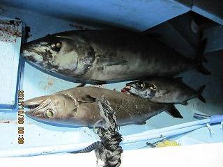 やはり駿河湾で獲れるアブラソコムツ(上の二匹)というマグロのゾンビみたいな魚もたくさん食べると同様の現象が起こる。よし、今度はこいつを狙おう!