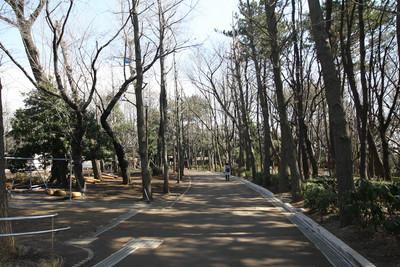 なかなか良い雰囲気の園路を先に進む