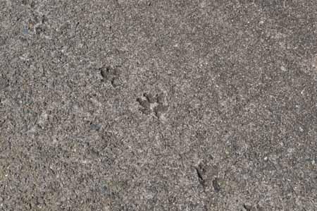 前面コンクリで犬の足跡だけあったんだけど、犬単独で来たのかな。