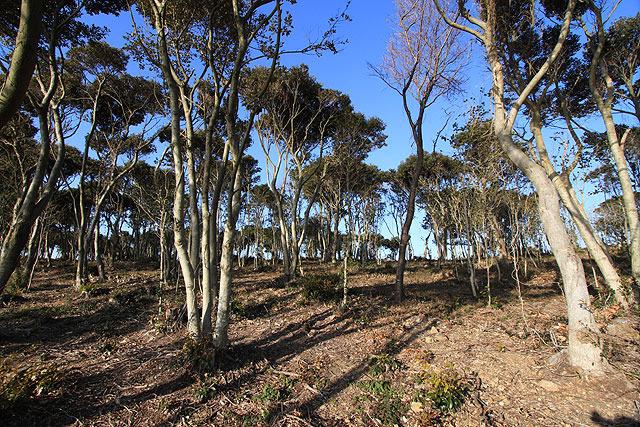 丘の上から砲台側を見ると、ただの林にしか見えない。