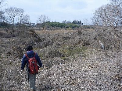 一面が枯れ草と裸の木で覆われている。先程の山以上に生命を感じられない。