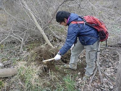 ここでは倒木の根に絡んだ土や、ボロボロに腐って土に還ろうとしている枯れ木を掘る。