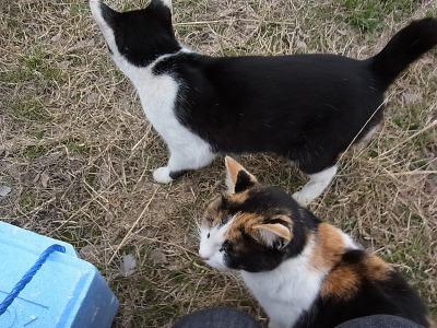 そうこうしているうちに猫に囲まれた。アジか。アジが狙いか。