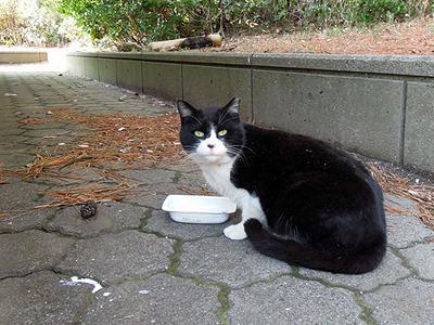 またたびよりもミルクのほうが美味しいって言ってる猫もいました