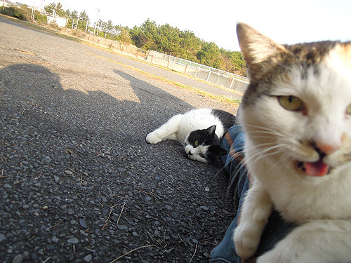 猫、満足すると足のほうに転がり始める