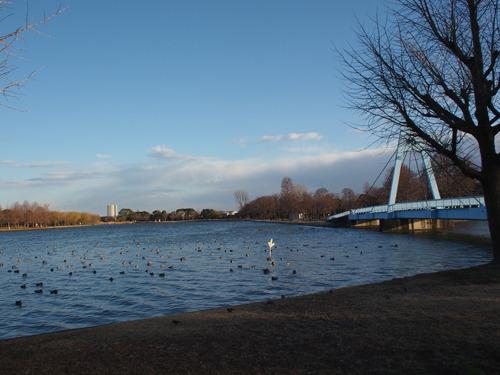水辺の公園。味噌おでんには池がとてもよく似合うと思うのだ