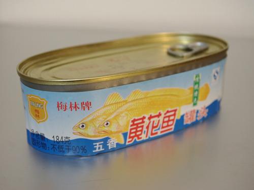 文字通り、黄色い魚…。なんすかコイツは!