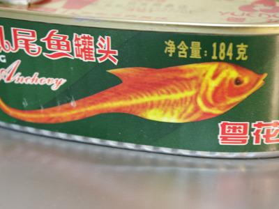 いったいなんだこの魚は?