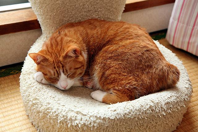 猫も夢を見る事が知られている。
