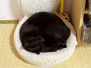 黒猫は寝るとブラックホールになる。