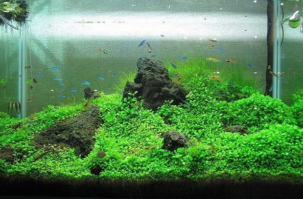 幅たった60センチの水槽に巨岩のはだける草原が!