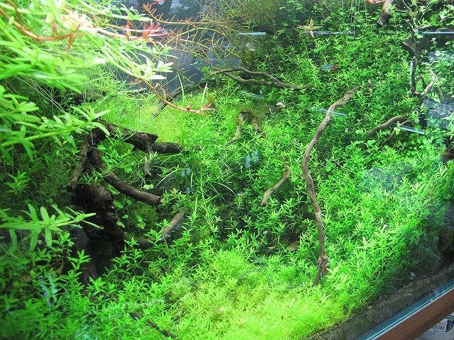 これでもかと茂った水草はめちゃくちゃ綺麗だけど、魚が遭難したりしないのかと心配にすらなる。