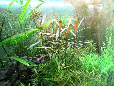 販売用の水草も丁寧に管理されていてとてもきれい。