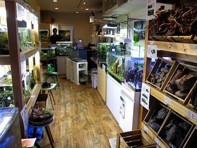 水草レイアウトに力を入れている観賞魚店には清潔で洗練された内装のお店が多い。