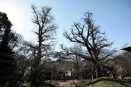 この老木は城だった頃を知っているのだろうか