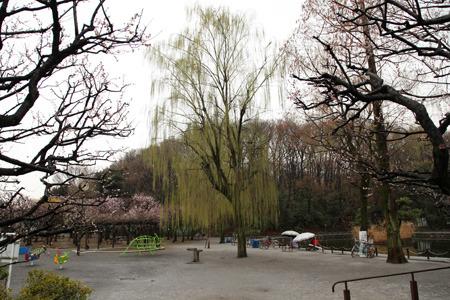 いまは赤塚公園となっている赤塚城趾