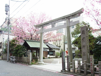 桜の花が舞い散る蔵前神社にいる