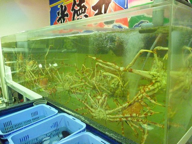 店内には幅3メートルの巨大水槽。中にはたくさんのタカアシガニがうごめく。