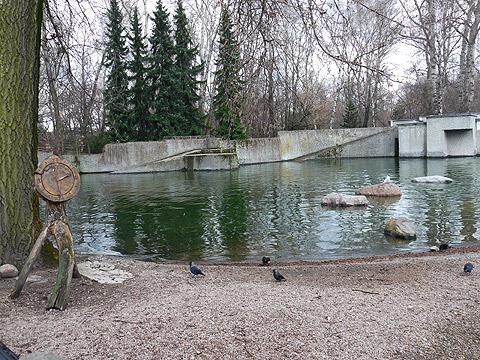 アザラシがいる池