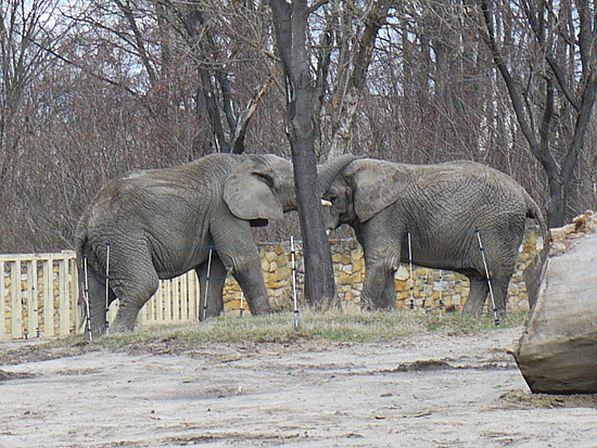ゾウも近かった。この国にいるとそうなるのかも!