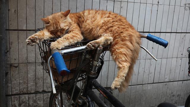猫ですら風景と認める自転車がある。