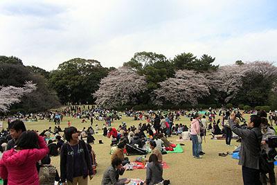 広い芝生の広場と沢山の桜が魅力。