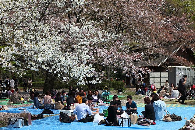 代々木公園の宴席はかなり自由な感じです。
