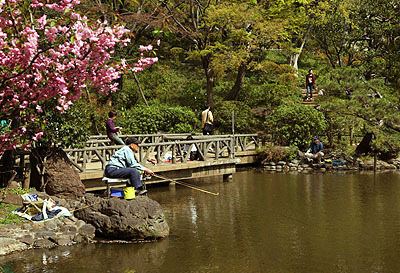 公園の池ではおじさん達が釣りをしていた。なるほど、確かに釣り人は岩の先にいますな。