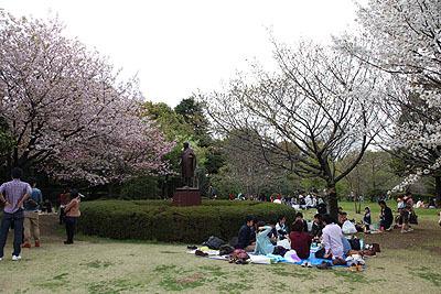 割りと桜多め。来年はここに来ようかな。