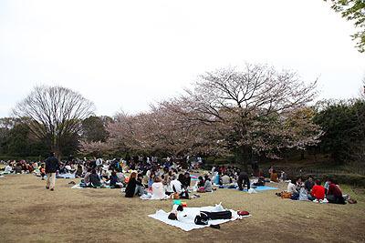吉田茂周辺より開けた花見スポットです。