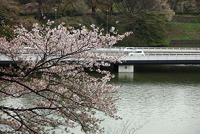 高速道路とお堀と桜。いいですなぁ。