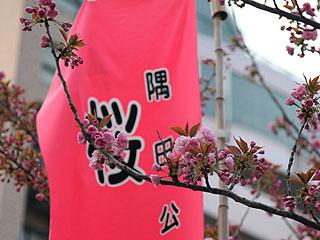 八重桜が咲いてました。