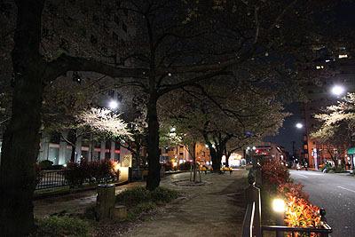 坂にある桜並木。