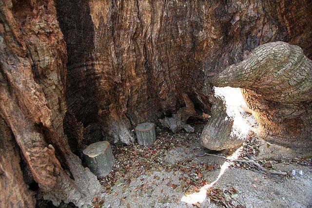 中は空洞で、木のイスが置いてあった。(楠は大きくなると根本が空洞になる)