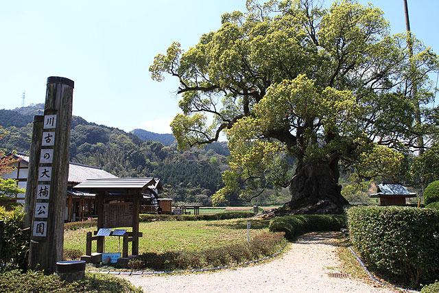 周辺が大楠公園となっている。