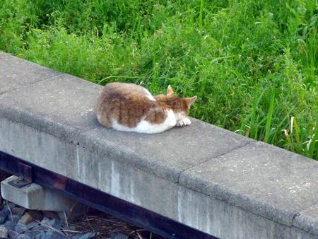 きっと猫は滅多に列車が来なくて安全なことを知っている
