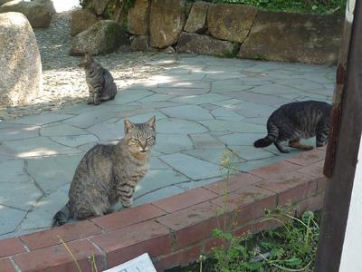 シマを荒らすなとばかりに猫がわらわらと。