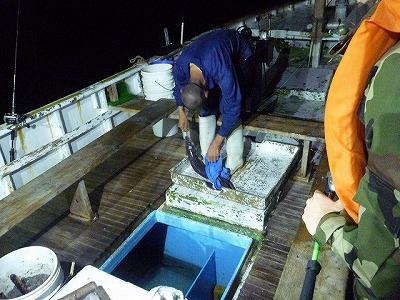 うっかりカエシのついた釣り鈎を使うと、それを口から外す作業だけで大騒動になる。