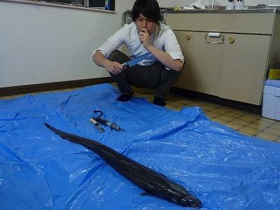 まな板の上の鯉ならぬブルーシートの上のアナコンダ