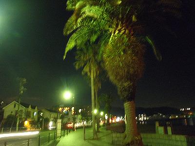 久里浜の街はなんだかトロピカル。