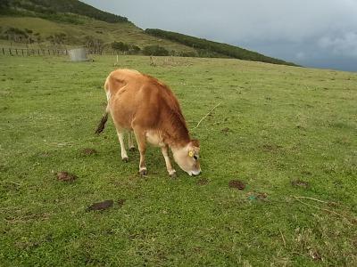 そういえば牛を見た。これは重大な思い出だ。